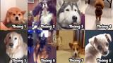 Giống chó nào đại diện cho tháng sinh của bạn?