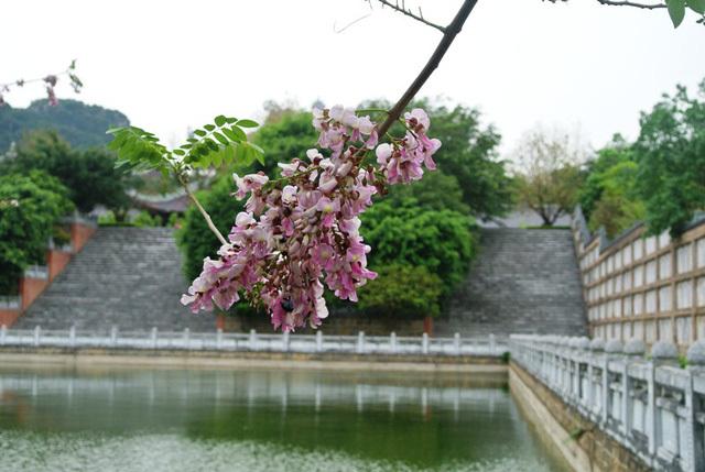 Hoa lạ nở rộ tại chùa Bái Đính