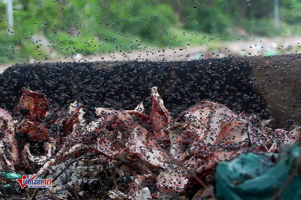 ô nhiễm môi trường,Hà Nội,xác động vật
