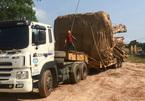 Chủ nhân 32 tuổi của cây 'quái thú' bị phạt 750 nghìn đồng