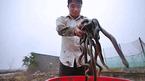 Kinh hãi đàn rắn gần 3.000 con dưới đáy ao ở Hà Nội