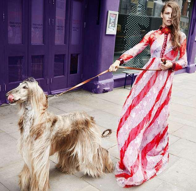 Thần thái sang chảnh của 'cô nàng' chó siêu mẫu