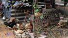 Hà Nội: Quây bạt nuôi gà, trồng rau giữa khu vui chơi