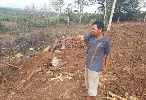 Chủ cây 'quái thú' ở Đắk Lắk: Người ta đưa tôi xấp giấy bảo ký