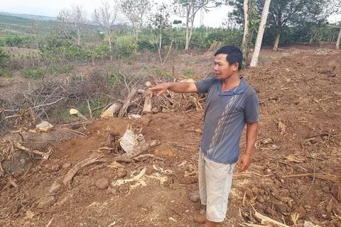 Chủ cây 'quái thú' ở Đắk Lắk: Người ta đưa tôi sấp giấy bảo ký