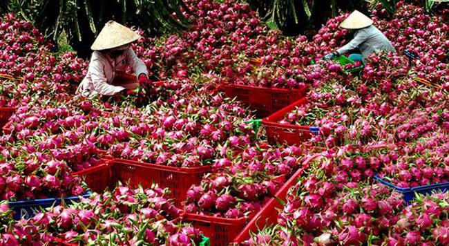 nông sản việt,xuất khẩu nông sản,thị trường trung quốc,Bộ NN-PTNT