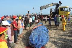 Ngư dân Phan Thiết làm lễ chôn cá voi nặng 3 tấn