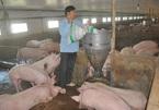 Cả năm hô hào 'giải cứu': Thịt lợn vẫn giá 'rẻ bèo' 32 ngàn/kg