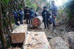 Quảng Nam: Hàng loạt cán bộ bị đình chỉ công tác