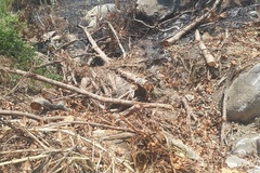 Bí mật 3 cây đa sộp 'quái thú' từ đất Đắk Lắk