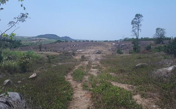 CSGT,Đắk Lắk,cây quái thú,kiểm lâm