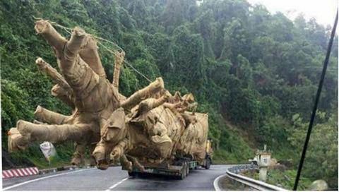 cây quái thú