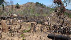 Phá 1.500m2 rừng đặc dụng: xử phạt hành chính?