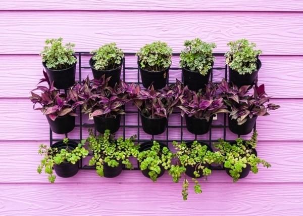 Những khu vườn đứng sáng tạo dành cho không gian hẹp
