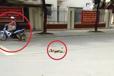 Chó mẹ chặn người đi đường lại để cầu cứu con