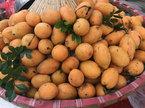 Bí ẩn loại quả giống hệt biwa Nhật: Cơn sốt trên vỉa hè Hà Nội