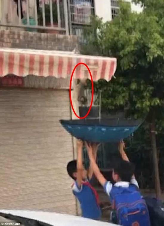 Hai bé trai cứu chú mèo mắc kẹt bằng cách cực kỳ thông minh