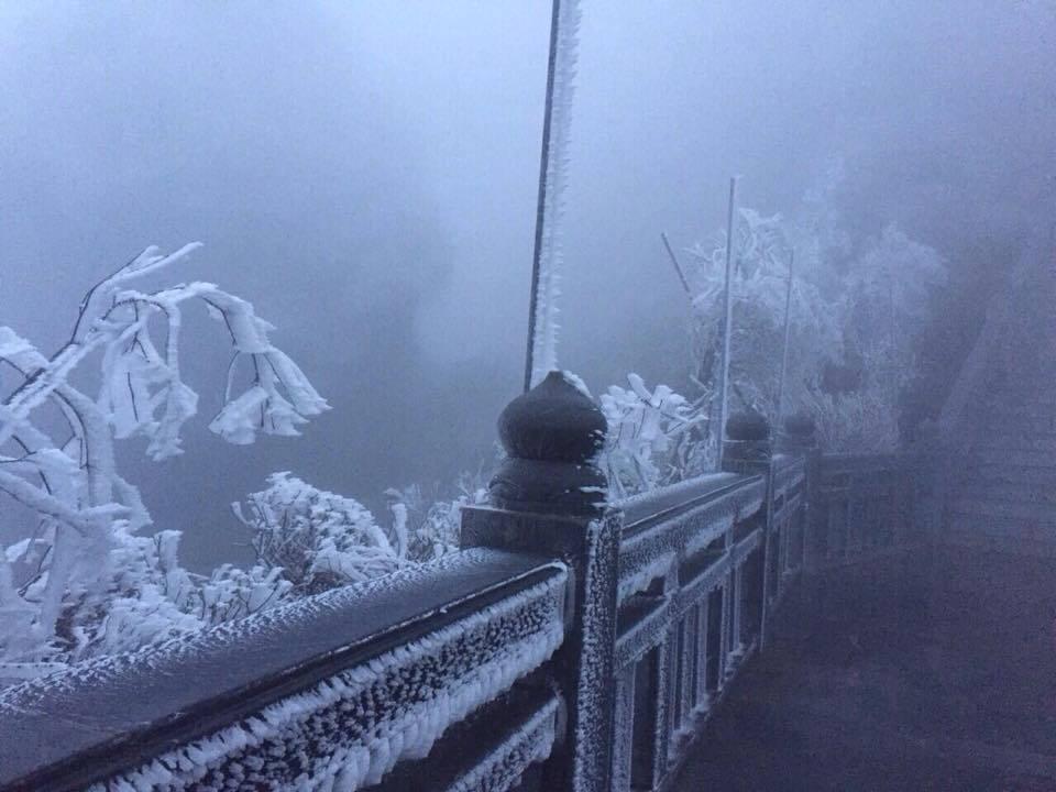 Hiếm gặp: Bông đỗ quyên rực lửa thành hoa tuyết trên đỉnh Fansipan