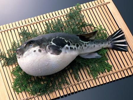cá nóc,Nhật Bản
