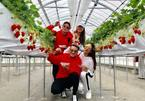 Đàm Vĩnh Hưng thích thú thăm vườn dâu tây Nhật Bản