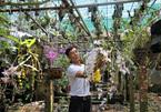 Ngất ngây với vườn lan rừng 3 tỷ ở Lâm Đồng