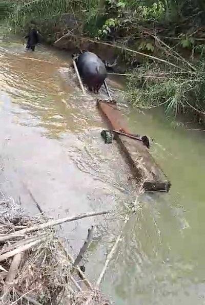 Gỗ lậu,Phá rừng,Công ty lâm nghiệp Ea Kar,Xã Cư Bông,Hạt kiểm lâm,Đắk Lắk