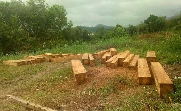Bắt 'đoàn tàu' gỗ lậu trong rừng do công ty lâm nghiệp quản lý
