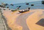 Vệt nước lạ màu gạch ở biển Quảng Bình là trứng nhuyễn thể?