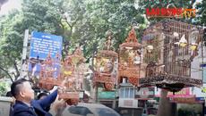 Ngắm bộ sưu tập chim màu giá gần 10 tỷ đồng tại Việt Nam