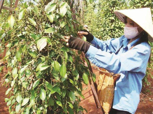 Thế mạnh Việt Nam bất ngờ tụt dốc: 'Bệnh kinh niên' chưa dứt