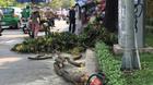 Cô gái ở Sài Gòn bất tỉnh khi bị nhánh cây rơi trúng đầu