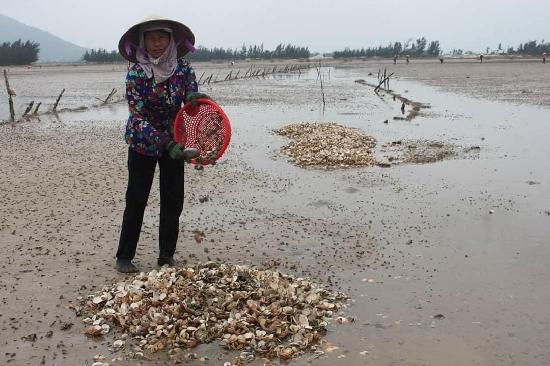 Hà Tĩnh,ô nhiễm môi trường,ô nhiễm biển