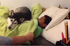 Phản ứng bất ngờ của chú chó khi bà chủ lật chăn của ông chủ