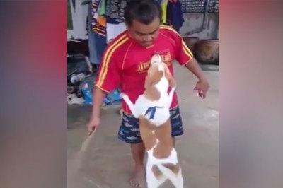 Chú chó nịnh chủ vì lỡ làm hỏng cánh cửa