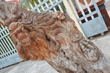 Kinh ngạc cây tươi bỗng 'hóa rồng' ở An Giang