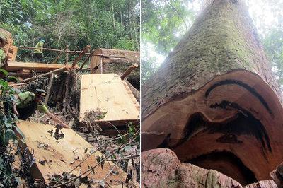 Anh xem biệt thự của tôi, gỗ quý nào chẳng có