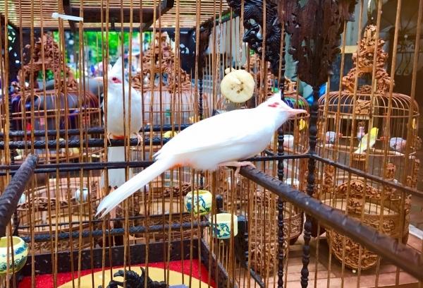 Độc nhất vô nhị: Đàn chim 10 tỷ của đại gia Hà Nội