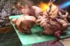Chim rừng non bị thiêu sống tàn nhẫn ngay trên bàn cân cho khách nhậu