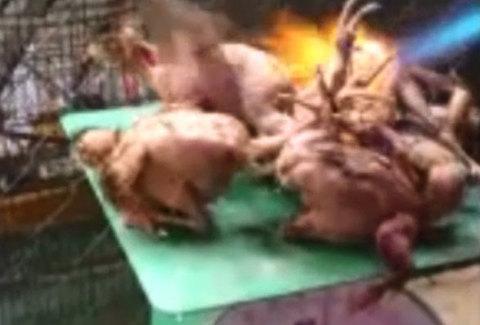 Chim rừng non bị thiêu sống tàn nhẫn ngay trên bàn cân để bán cho khách
