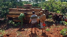 Lật xe cày, 3 người bị gỗ đè thương vong lúc mờ sáng