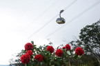 Rực rỡ sắc hoa đỗ quyên trên đỉnh Fansipan