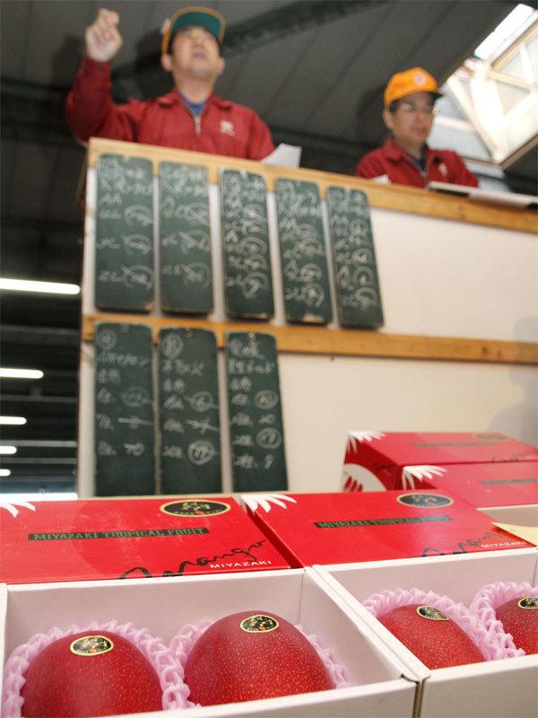 xoài thượng hạng,xoài Nhật,xoài Taiyo no Tamago,Nhật,đấu giá,thượng hạng,trái cây Nhật