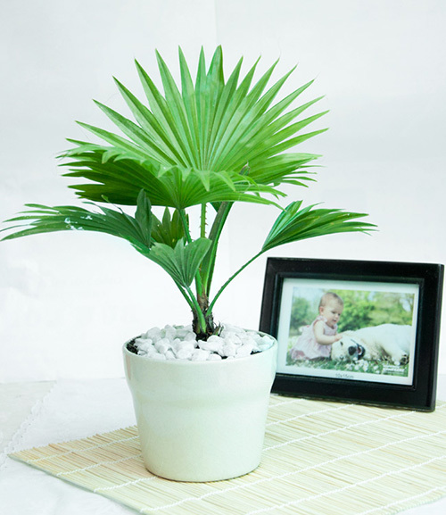 Nhà đẹp,cây cảnh,cây cảnh trồng trong nhà,các loại cây hút ẩm mốc trong nhà