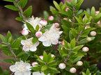 5 loại cây hút ẩm, diệt nấm mốc cực tốt nhất định nên trồng trong nhà mùa này