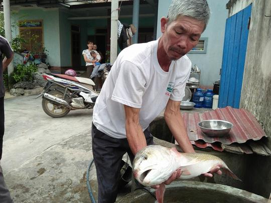 Ngư dân bắt được cá lạ, nghi cá sủ vàng tiền tỷ
