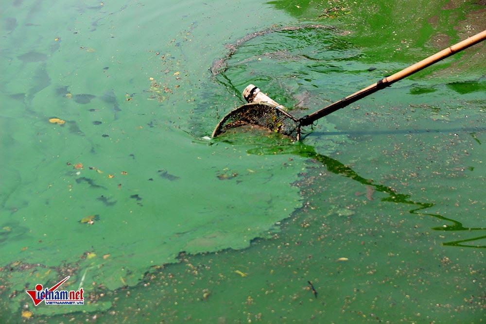 Hà Nội: Xuất hiện váng nước lạ trải dài ven hồ Gươm