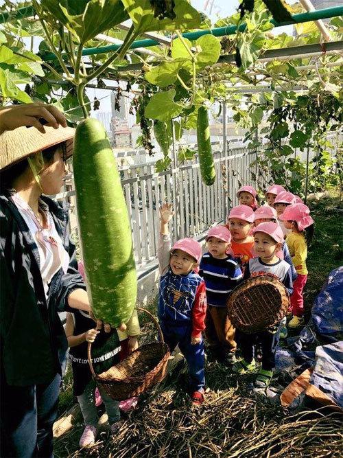 Trường Quốc tế Nhật Bản chủ động nguồn thực phẩm sạch