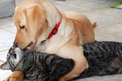 Chó cứu mèo thoát khỏi hố sâu gây xúc động