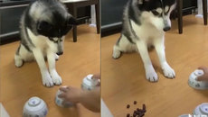 Cái kết tê tái cho chú chó trót chơi trò đỏ đen