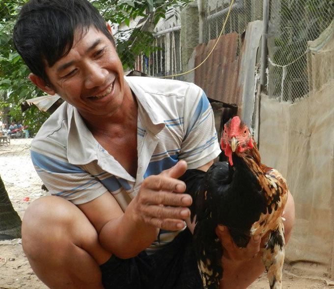 Kỳ lạ con gà 'pê đê' có biệt tài gáy được 2 giọng trống, mái